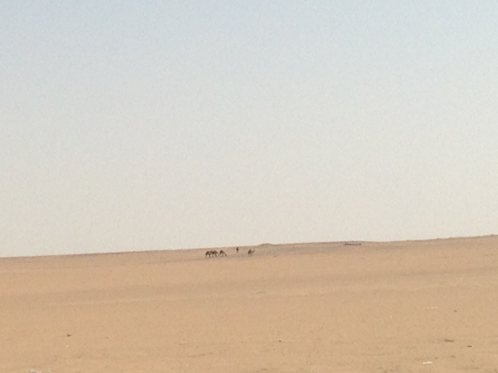 That's how flat it was in Kuwait. But yes, those are camels